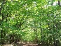 緑豊かな高原リゾート