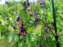 【夏のお日にち限定!】ブルーベリー収穫体験とお子様プール利用特典付プラン 和洋室禁煙