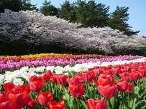 花フェスタ2015開催! ワンドリンク付春ルンルンプラン♪