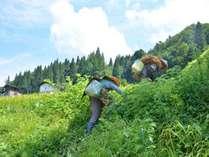 二十四節季 農と里の暮らしちょっと体験宿泊 (一泊2食付き)