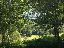 一日木陰の涼しいキャンプサイト