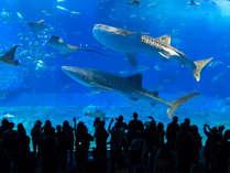 沖縄美ら海水族館/朝早く行くのがオススメです