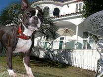 押し花アートを楽しめる犬の宿 伊豆高原 ガラスの仔犬
