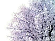菅平**白銀の世界で温泉彡*洞窟風呂【スタンダード宿泊プラン】。°( ^^)特典付