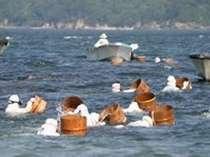 夏は海女さんの季節又アワビ・サザエ・とこぶし・岩牡蠣・ウニと美味しい物がいっぱい!