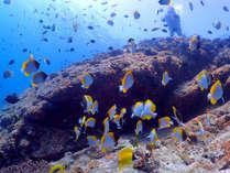 【奄美の海】魚黒潮の影響が大きい湾なので生物層が非常に豊かです♪