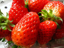 ビタミンCいっぱいの苺は美肌効果も♪