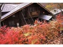 くらんぼーんの玄関紅葉、新緑が美しい