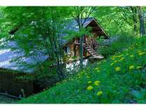 春のすがすがしい緑に囲まれたペンションくらんぼーん