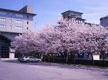 桜満開!春の風景です。