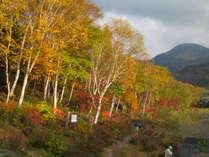*志賀高原の紅葉 / 毎年見ごろは10月上旬〜10月中旬です。志賀草津道路のドライブもオススメ。