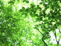 *新緑イメージ爽やかな高原の緑をお楽しみください♪