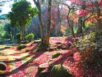 ■四千坪の庭園■ 秋の庭園(12月上旬)庭園散策は如何ですが♪