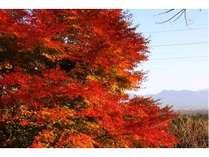 秋  ゆったり紅葉の季節☆お得に連泊プラン≪お部屋代のみ≫
