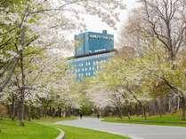 ホテル裏(春)