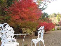 秋に紅葉する紅葉露天風呂から紅葉が楽しめる