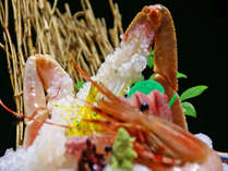 タグ付き活松葉ガニ!日帰り漁の美味しさを!!