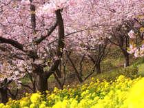 みなみの桜と菜の花まつり2/10~3/10