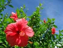 【沖縄の夏】青い空と白い雲、そして青い海と白い砂浜のまさに絵はがきのように美しい風景が広がります。