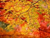 紅葉彩るこの季節☆美味しいお料理とお酒と共に♪