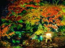 日常とは異なる幻想的な姿を見せる依水苑