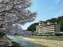 桜の木越しに眺める依山楼岩崎
