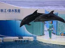 イルカ・あしかのショーが人気!新江の島水族館