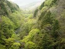 ☆周辺・景色_八ヶ岳