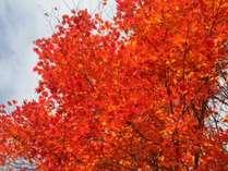 紅葉の赤が美しいです。