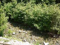 *施設裏には川が流れており、お部屋からもその長閑な風景を眺められます◎