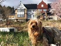 よませ温泉 ペットと泊まれる温泉宿 パディントンハウス