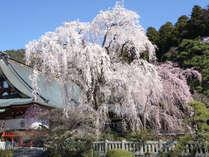 ◆桜テラスopen記念◆桜に囲まれた空間で過ごす大人の時間◆桜色特典付◆1泊2食付