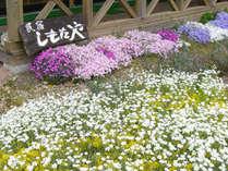 当民宿の周りには様々な花が咲きます、花好きなあなた花談義しませんか(^^)