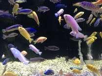 【山の水族館】色とりどりの熱帯魚も展示しています
