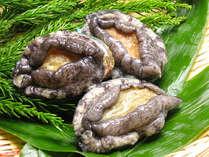 新鮮なあわびは、お刺身、もしくは踊り焼きで。