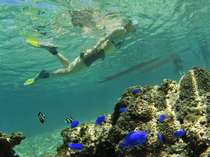 透明度が高く美しい宮古島の海。カラフルな熱帯魚と泳ぐ。心に残る夏をお過ごしください。
