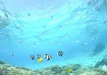 海の中に潜ってみると、熱帯魚がいっぱい!