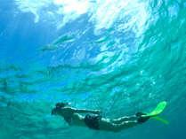 夏が続く宮古島。透明度の高いシギラビーチの海の中は熱帯魚と珊瑚礁の世界が広がり海ガメと出会えることも