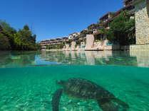 外観(プールヴィララグーン棟)/ラグーンにはアラマンダのシンボルとも言えるウミガメが。