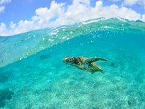 【シギラビーチ(リゾート内)】サンゴ礁や熱帯魚はもちろん、時にはウミガメにも出会えるビーチです。