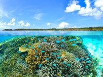 【シギラビーチ(リゾート内)】シギラビーチの中には鮮やかな熱帯魚や珊瑚の世界が広がっています。