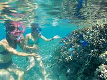 【感動体験シュノーケルツアー】海の中をのぞけばまるで竜宮城のよう。熱帯魚と一緒に泳ぎましょう。