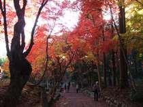 鶏足寺の紅葉:紅葉の名所「鶏足寺」シーズンには京阪神からも多くの見物客でにぎわいます。徒歩15分