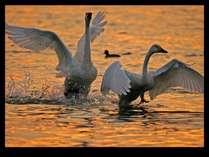 野鳥を撮ろう!野鳥写真撮影応援プラン