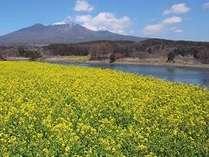 八ヶ岳 春