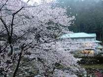 だるま湯の景色/2013春
