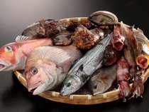 釣りたて、獲れたて!その日に仕入れたばかりの豊富な天然魚を、持ち味を生かしながら丁寧に調理致します。