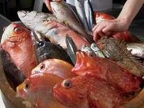 今日お出しするお魚は・・・毎日一番の新鮮な天然魚を吟味し卓へお届け♪