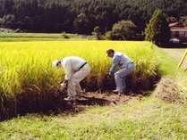 契約農家の方々のおかげで梅乃屋の食材は活きています。