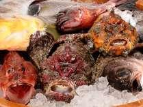 日本海見島沖の根つき魚(写真は一例)※その日一番のお魚を一番の調理方法でご用意いたします。